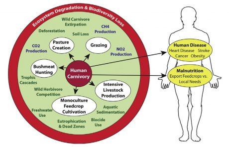 שימור מגוון ביולוגי: המפתח הוא בצמצום צריכת בשר