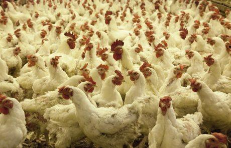 סיכום מפגש נובמבר בנושא היבטים בריאותיים וסביבתיים בתעשיית העוף