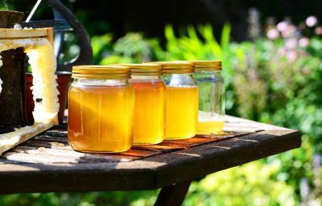 הכל דבש? חיזוק וקידום ענף הדבש
