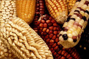 מפגש פורום: מזון מהונדס גנטית