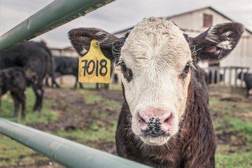 מפגש יולי: בחינת אסטרטגיות לצמצום צריכת בשר ומוצרי חלב