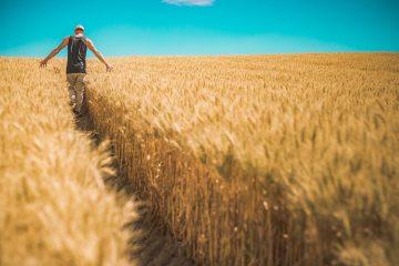 תמיכות ישירות בחקלאים לפני ביטול מכסים – נייר עמדה