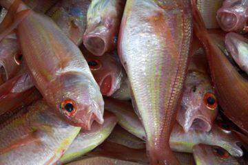 נייר עמדה בנושא דגי בריכה בישראל כחלק מחקלאות מקיימת