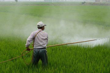 ניהול סיכוני בריאות וסביבה במזון בישראל